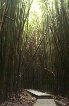 Maui bamboo walkway