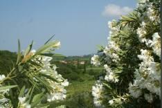 croatia-through-flowers